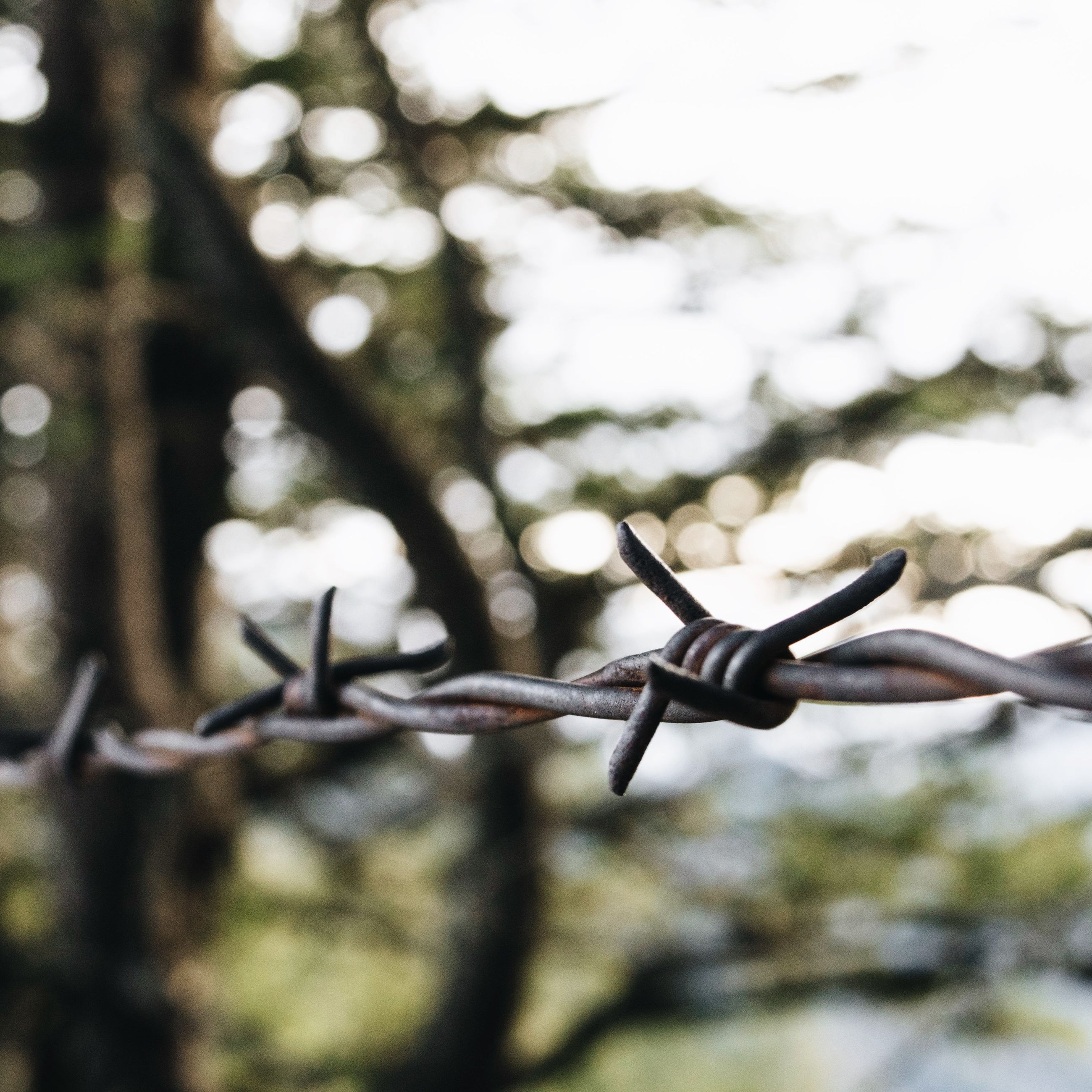 focus on foreground, close-up, metal, selective focus, day, outdoors, no people, metallic, protection, animals in the wild, nature, twig, branch, safety, animal themes, one animal, wildlife, tree, sunlight, fence