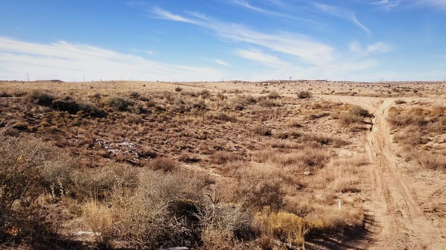 Arid and cold landscape Dead Plant Dried Wilted Plant Dried Plant Tranquil Scene Semi-arid Rugged Dry Tranquility Landscape Sky Pattern Blue Arid Climate Desert Environment Land Plant Nature Non-urban Scene Beauty In Nature Scenics - Nature No People Cloud - Sky Field Horizon Horizon Over Land Outdoors Grass Climate
