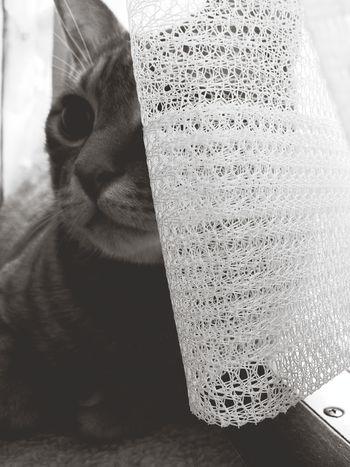 あめやん。 うちの猫 レイニーブルー Cats Blackandwhite