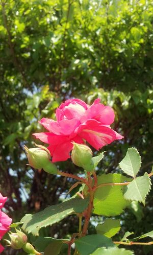 Every rose has it's thorns The Purist (no Edit, No Filter) EyeEm Nature Lover It's The Thought That Counts