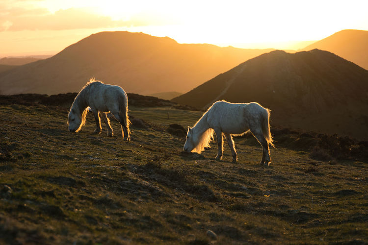 Horses grazing in a field with mountains