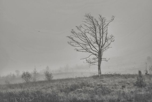 Nature Plant Outdoors Landscape Silhouette Bare Tree Sky Day Branch Beauty In Nature Grass Foggy Mistic Place Landscape_photography Low Angle View Scenics Black & White