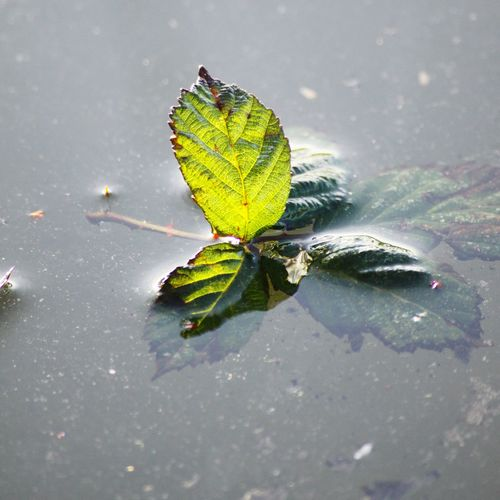 Frozen leaf Outdoors Water Nature Reflection Day Winter Leaf