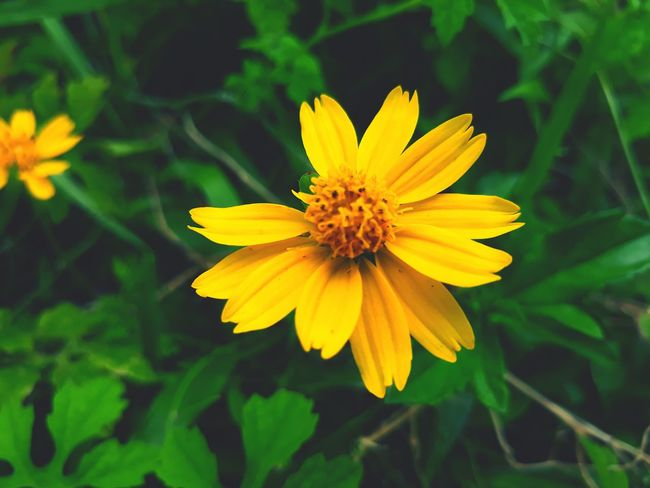 Flower Petal Fragility Yellow Plant Flower Head Insect Freshness Nature No People Outdoors Focus On Foreground Day Beauty In Nature Close-up Leaf Summer Green Color One Animal Growth
