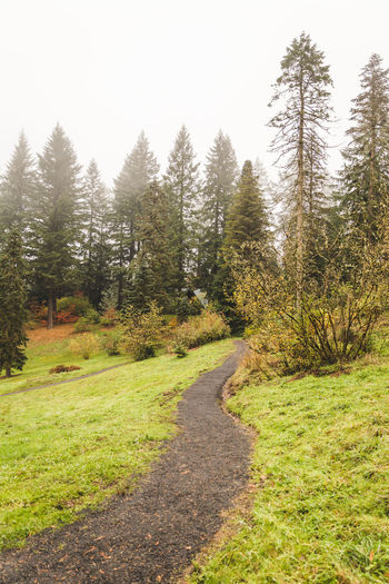 Hoyt Arboretum / Forest Park in Portland, Oregon, USA. Fall time foggy and rainy day. Beauty In Nature Clear Sky Curve Day Forest Grass Growth Landscape Nature No People Outdoors Road Scenics Sky The Way Forward Tranquil Scene Tranquility Tree