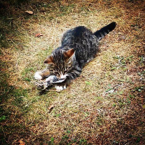 Cat Vscolovers Vscocam Vscogood vscostyle vsco