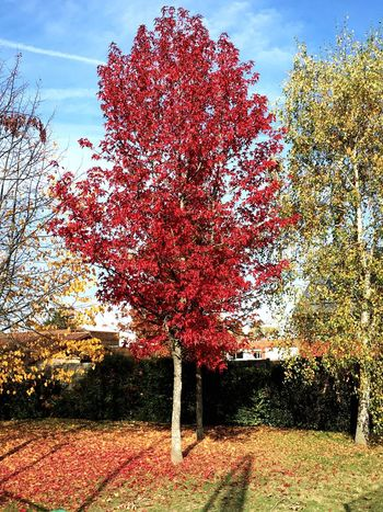 Growth Tree Nature Red Flower Beauty In Nature Change Fragility Day Outdoors Sky No People Freshness Architecture