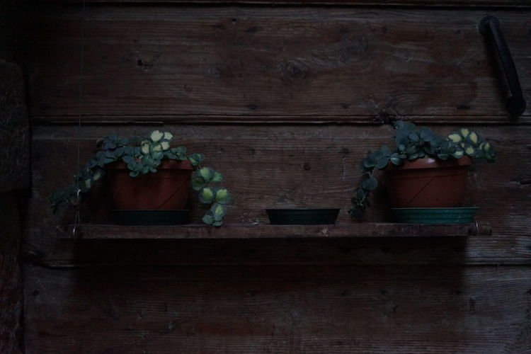 Potted plant on wooden wall