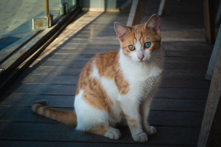 Portrait of cat sitting on sidewalk