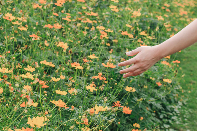Cropped hand touching flowers in field