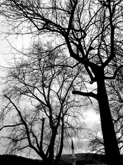 Tree art Winter In Sarajevo