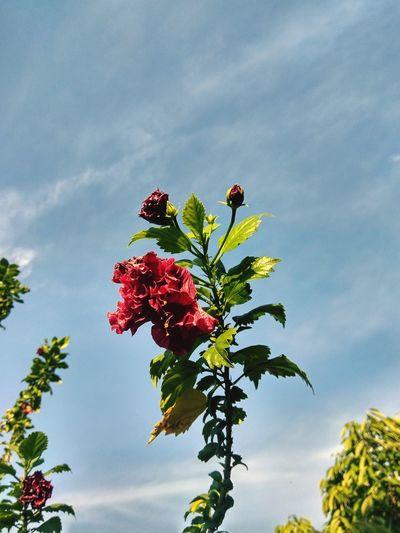 Flowers, alone