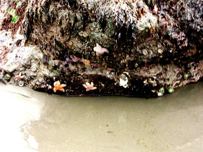 Sea_collection Starfish  Check This Out Beach Photography Ocean Life Low Tide The Ocean Nature_collection Rocks Beautiful
