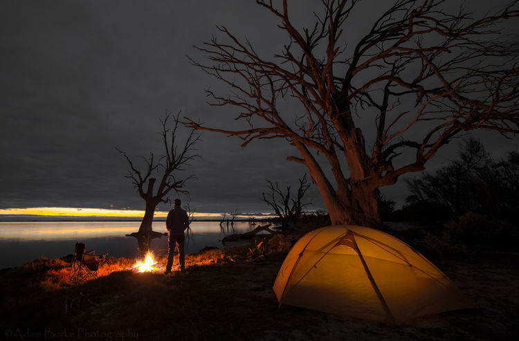 Bare Tree Beauty In Nature Dark Lake Bonney Landscape Majestic Nature Non Urban Scene Outdoors Remote Scenics South Australia Sunset Tranquil Scene Travel Destinations Tree