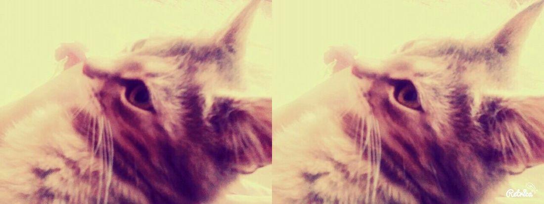 Мая любимая кошка