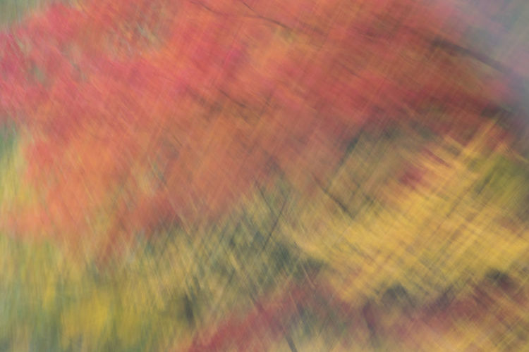 Fall out the window. Abstract Autumn Capturing Movement Fall Fall Colors Outthecarwindow Pattern Tree Trees