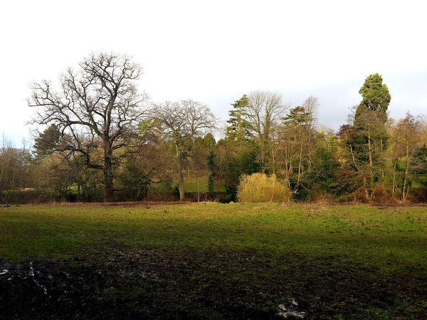 Beautiful Nature Trees Wintery Trees Greenery Green Knaresborough