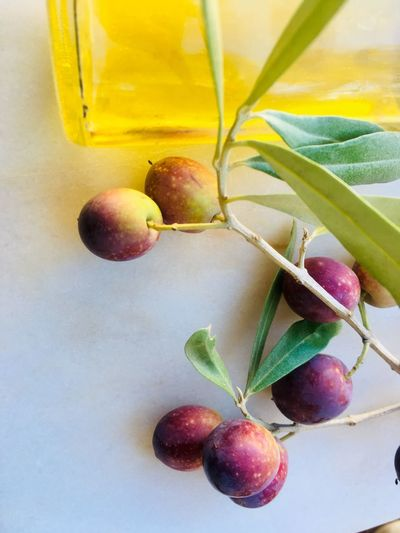 Yellow olive oil and olives fruit Food Agriculture Portuguese Mediterranean  Branch Yellow Table Fruit Oliveoil Olives