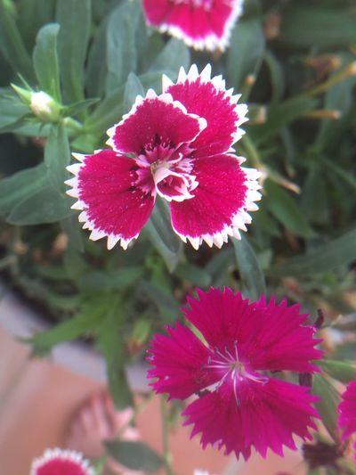 Pinks Through Lens