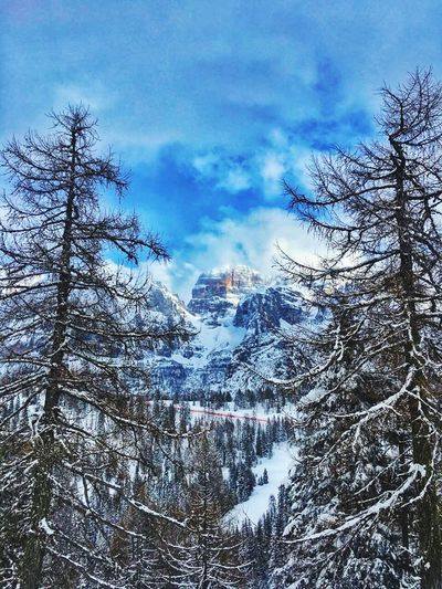 Pinzolo, Italy. Pinzolo Mountain Trees Sky Winter Snow Low Angle View No People Cold Temperature Nature Beauty In Nature Outdoors Italy🇮🇹 Trentino Alto Adige Tree Cloud - Sky Bare Tree Day
