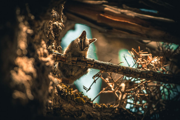 Low angle view of chipmunk on twig