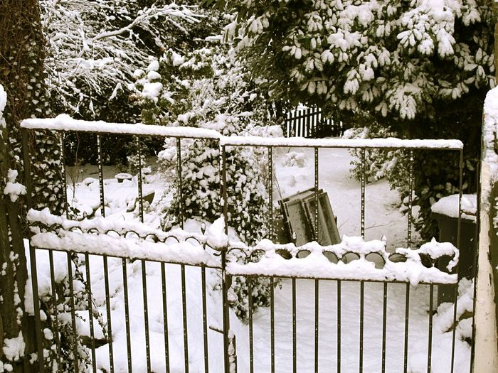 I love wandering around in the snow, especially when it's fresh and undisturbed. Little towers of gathered snowflakes upon fences, plants and tress... such beauty. Snow Snowscape Snowy Snowy Day Snowy Trees Snowy Scene White Garden Fence Gate Wall Walled Garden Trees Tree TreePorn Snow Fall Wintertime Winter Wonderland How You Celebrate Holidays Yorkshire Pure Eyemphotography Eyeem Snow EyeEm Best Shots Learn & Shoot: Simplicity
