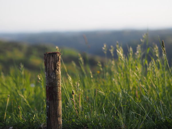 Beauty In Nature Close-up Day Field Focus On Foreground Grass Green Color Growth Landscape Nature No People Outdoors Scenics Sky Tranquil Scene Tranquility Tree Wooden Post
