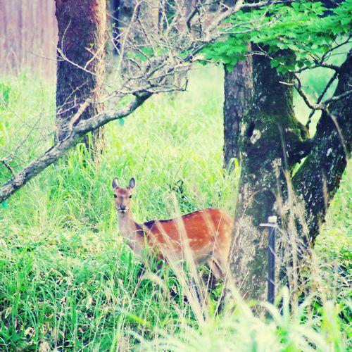 animal Natur