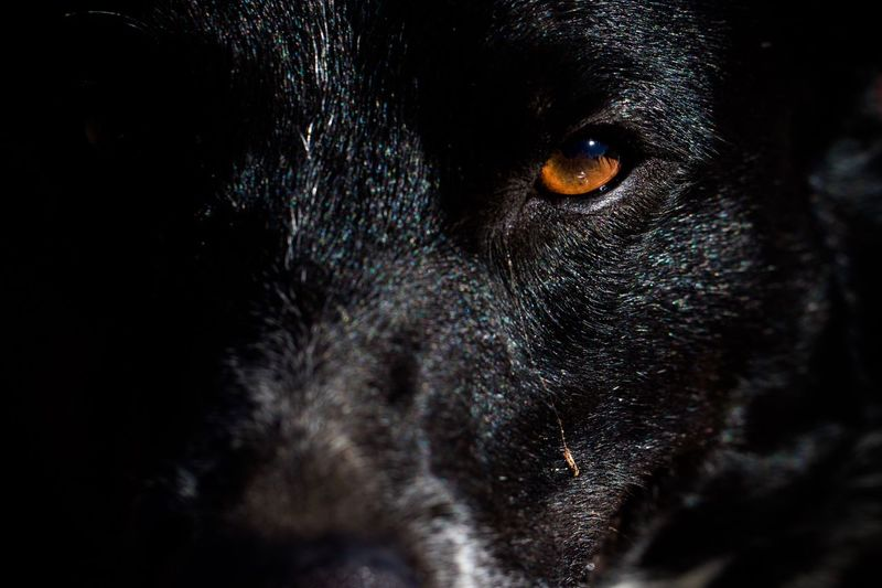 EyeEm Selects Dog One Animal Domestic Animals Pets Mammal Animal Themes Close-up