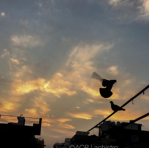 Dawn in Delhi, pigeons getting busy. Sky Cloud - Sky Day City Silhouette Dawn Of A New Day Delhi India Acbistro Acb Iphonography Random First Eyeem Photo