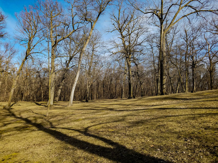 Tree Sunlight Nature No People Sky Outdoors Clear Sky Day Tranquility Beauty In Nature ParkExplore Minnesota Forest Spring Springtime Koronis Regional Park Freshness Growth Woods Trees Landscape Bare Trees March 2017 March