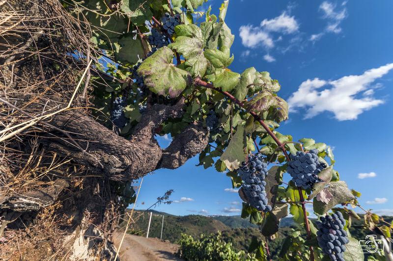 Caprichos de la naturaleza. Photo Vino RibeiraSacra Galicia Paisaje