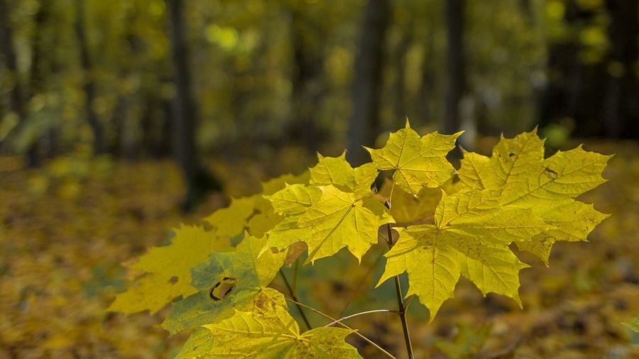 Maximum Closeness Nature Yellow Autumn Beauty In Nature Outdoors Forest Tree Plant Potsdam