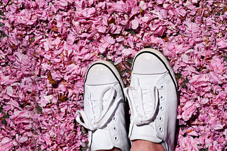Low section of person in shoes on pink petals