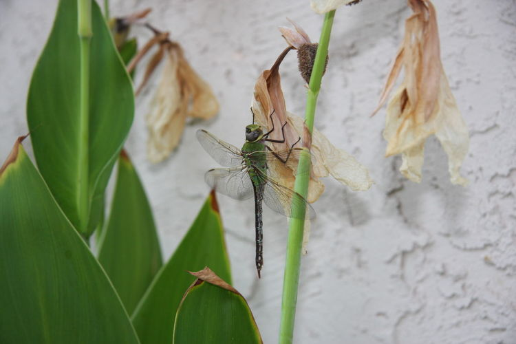 Bug Insect Close-up Damselfly Dragonfly Plant Life Flower Head Animal Wing
