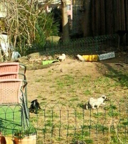 Hundezucht Hundeimpressionen im SilliconenSaxony Dresden Frankenbergstrasse