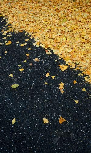 On The Road Autumn Enjoying Life