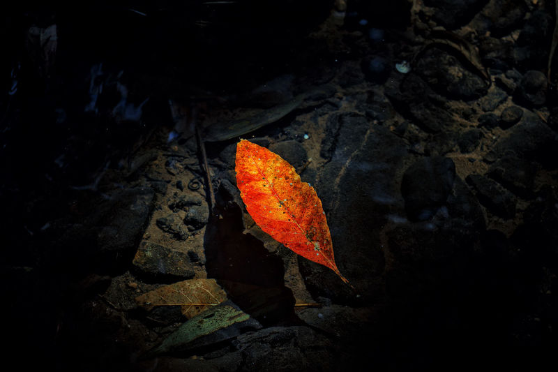 Nature Leaf Light Of Nature Red Leaf