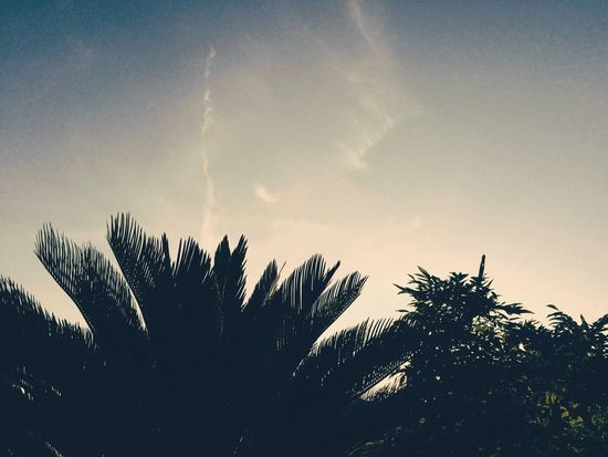 EyeEm Selects Tree Nature Sky No People Beauty In Nature Outdoors Day