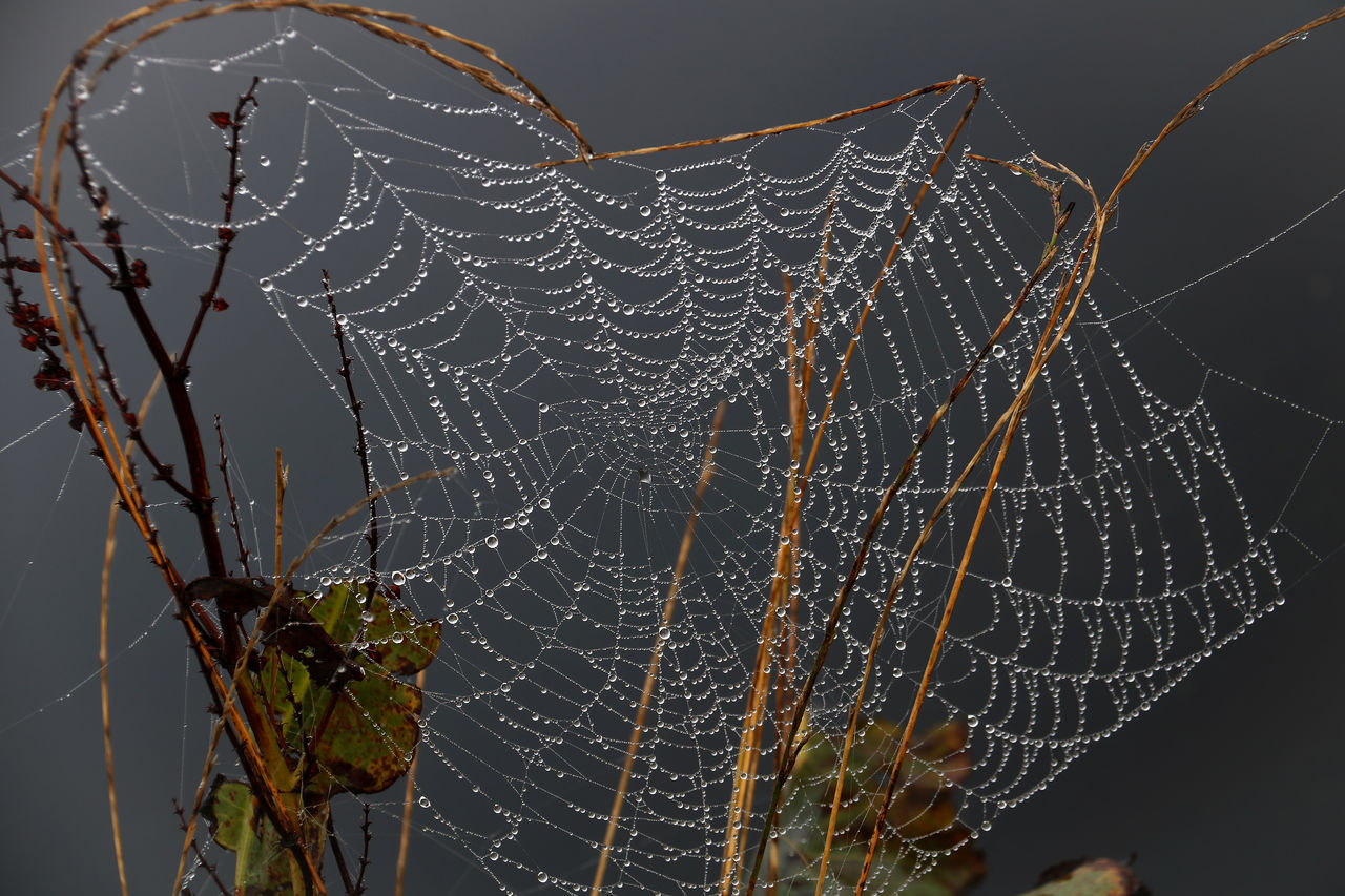 spider web, web, spider, nature, beauty in nature, focus on foreground, no people, close-up, outdoors, fragility, trapped, complexity, day, water, animal themes