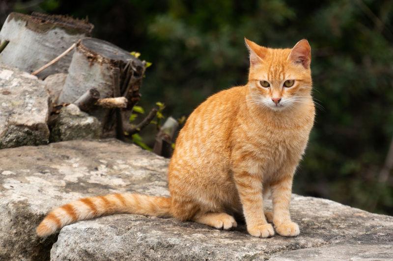 Cat Eyes Cat