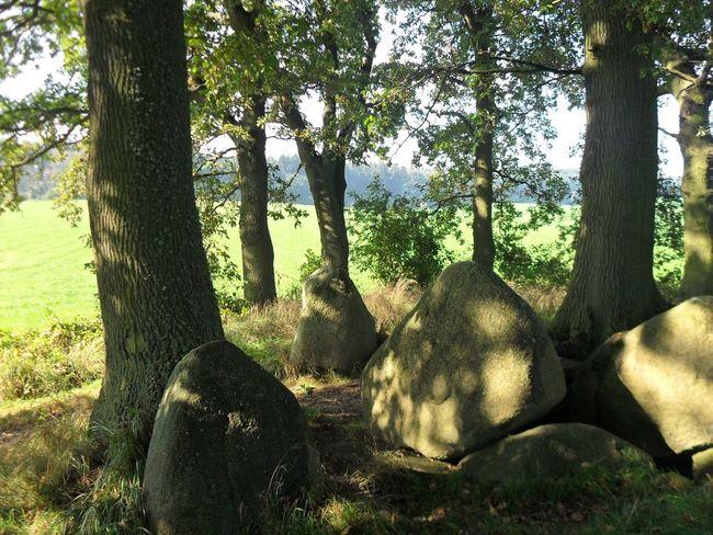Rügen Steine Dolmen Großdolmen Prehistoric Grave Prehistoric Monument