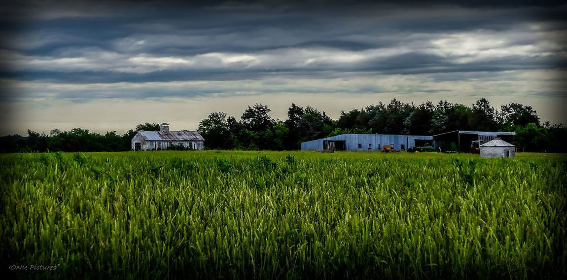 Agriculture Field Farm Rural Scene Crop  Cereal Plant Outdoors Landscape Barn Tranquility Scenics Sky Cloud - Sky
