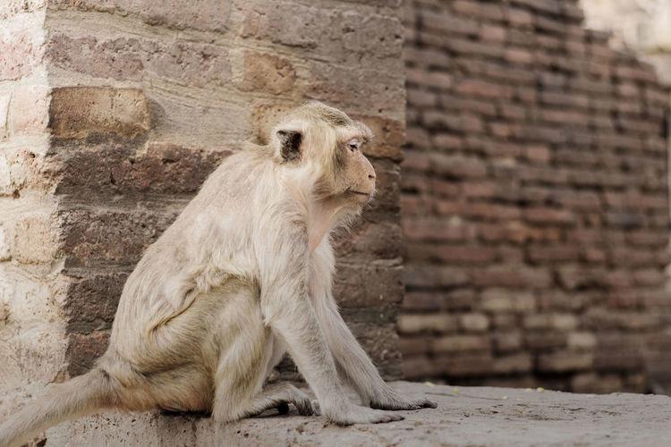 Monkey sitting on retaining wall