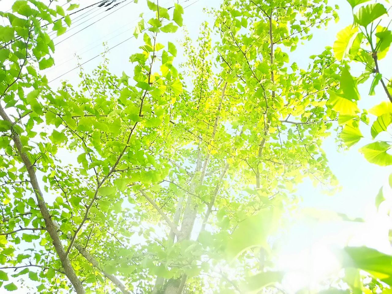 green color, nature, growth, leaf, low angle view, plant, beauty in nature, no people, tree, freshness, outdoors, day, branch, close-up