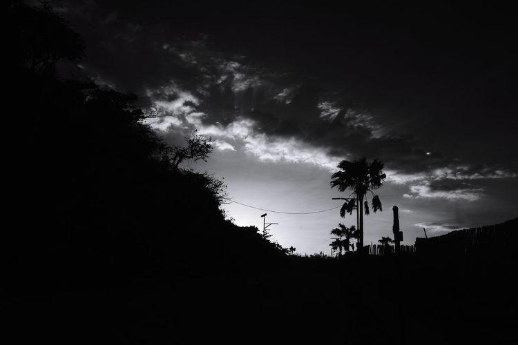 AcroS Beauty In Nature Bnw Blackandwhite Tree Silhouette Sky