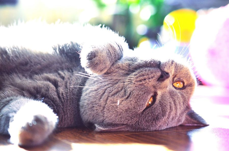 Cat♡ Cat Lovers Cat Photography Photo Light Colorful Relaxing Sweet Cats Of EyeEm