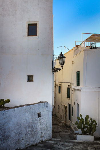 Architecture Built Structure Building Exterior Building Residential District Day No People Nature Window Plant Outdoors City House Sky Wall - Building Feature Old Wall Sunlight Potted Plant Blue Alley Puglia Italy White Village