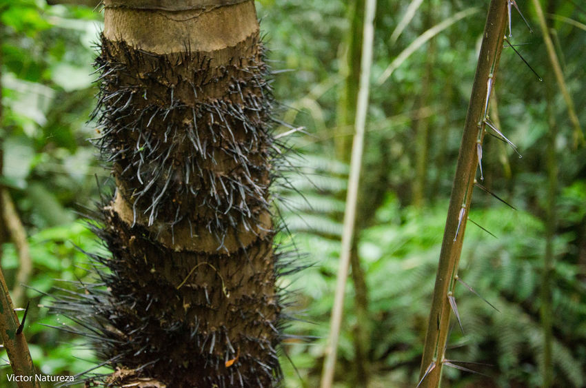 Animals In The Wild Beauty In Nature Animal Themes Brazil Textura Paraty Travel Destinations Brasil Fotografiaautoral Artefotografia Victornatureza Vitaonatureza Documentaryphotography Fotodocumental Documentary