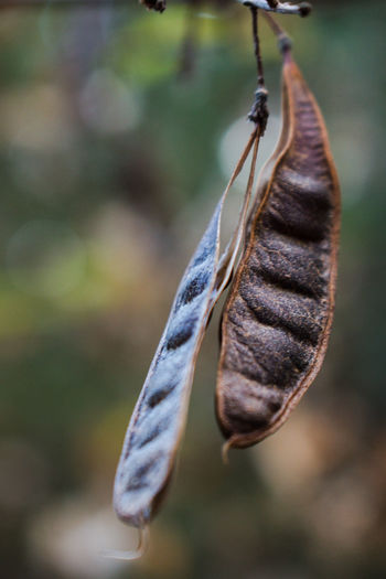 Close-up of dry leaf hanging outdoors